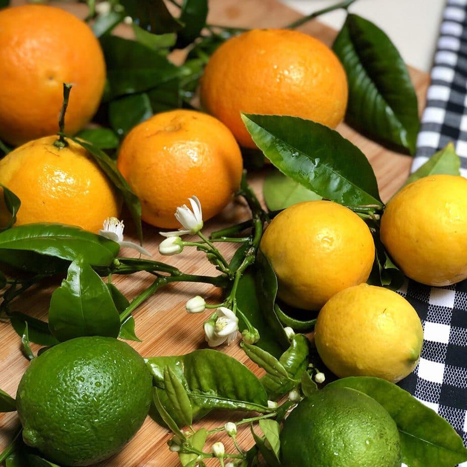 oranges lemons limes citrus